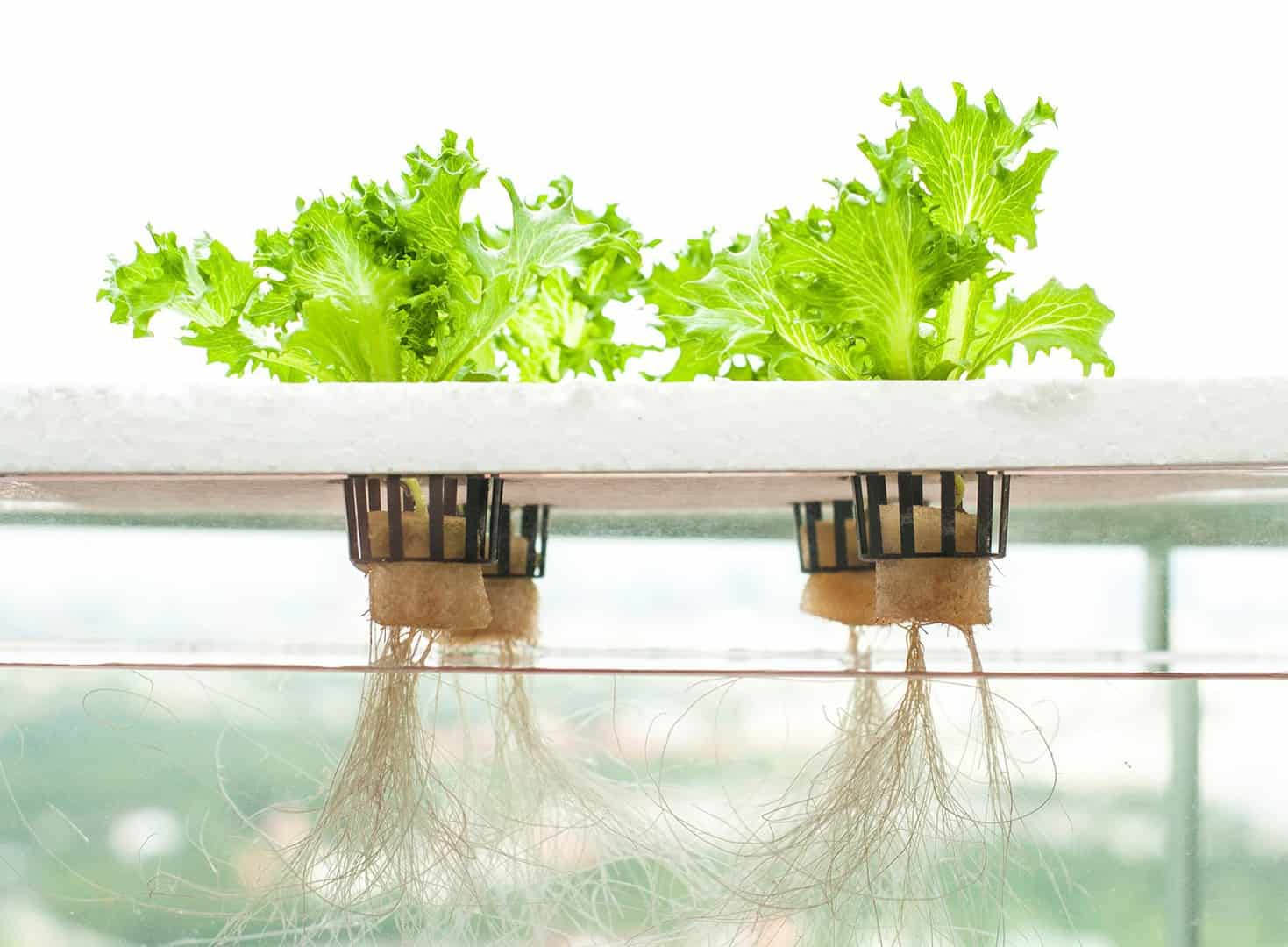 what is hydroponics and why is it a good idea?