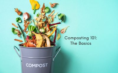 composting 101: know the basics