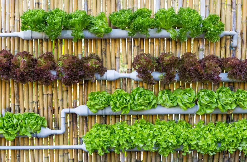 hydroponics and improving food access