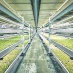 underground hydroponic farming