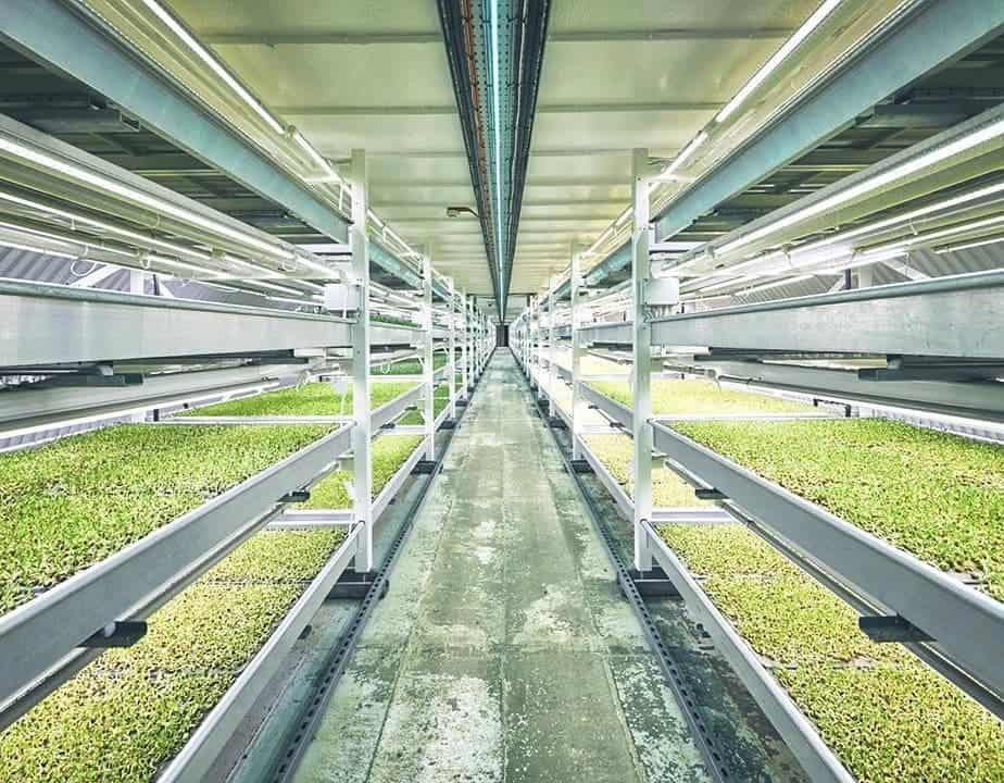 spotlight: hydroponic farming goes underground  in london