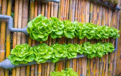 what can you grow with hydroponics?