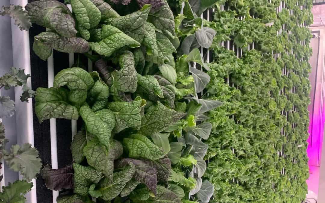 spotlight: dad & daughter hydroponics at fare house farms