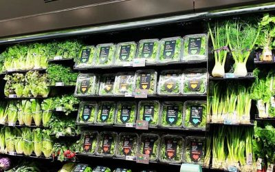 spotlight: publix's hydroponic harvest to customers in minutes