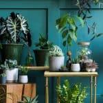 indoor nature plants