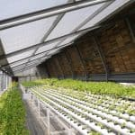 hydroponic garden farm rooftop greenhouse