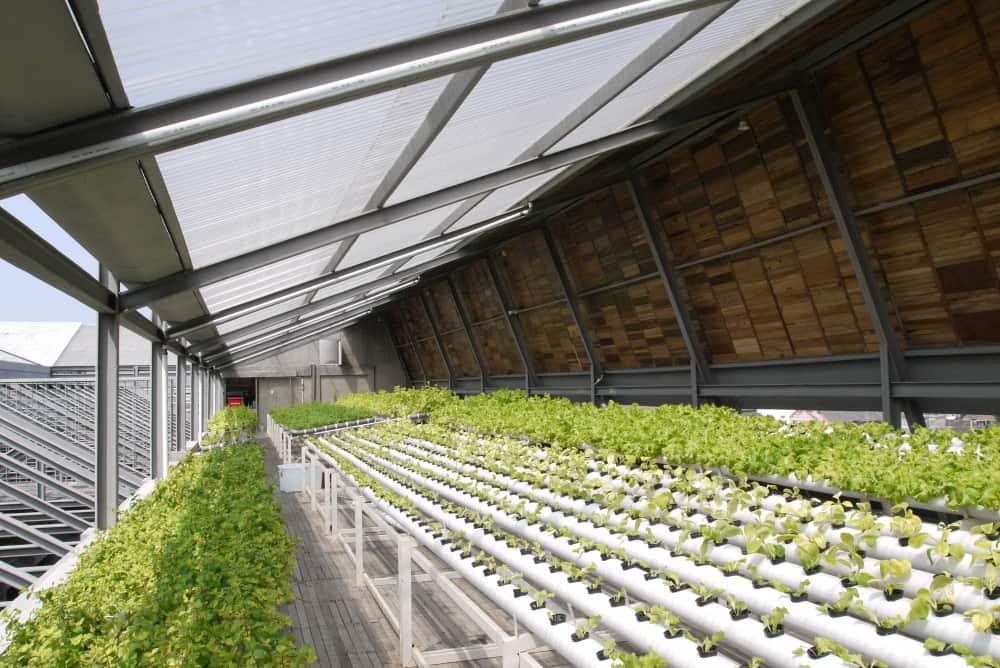 hydroponic garden farm rooftop greenhouse