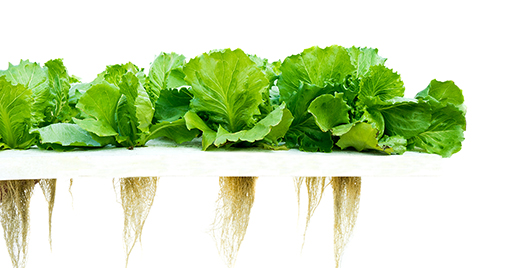 hydroponics sustainable to our core